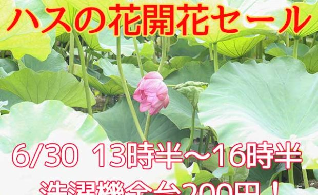 ハスの花セール20200630