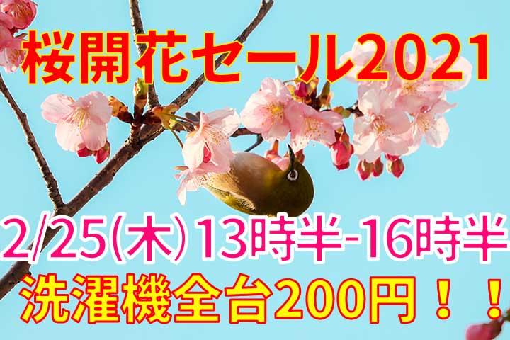 不忍池の河津桜が満開!桜開花セール2021開催!!