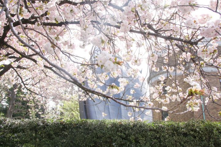クジラのオブジェ桜