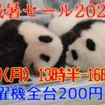 双子のパンダ名前募集終了!残暑セール2021開催!